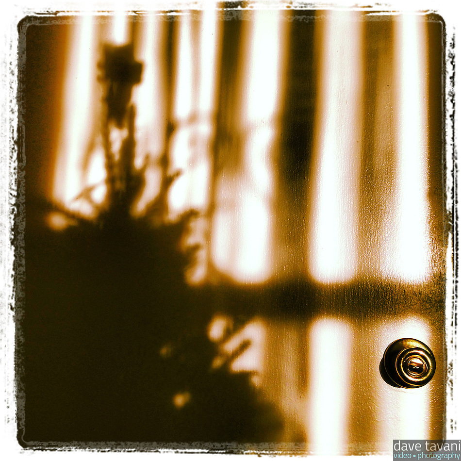 The morning sun creates a shadow of our Christmas tree on our basement door on December 6, 2012. (Dave Tavani)