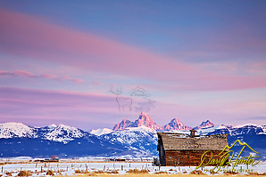 An old barn accents Teton Valleys long farming heritage below the Grand Teton Mountains