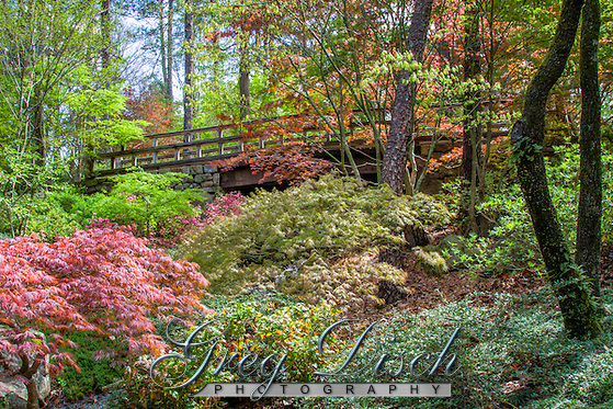 Garvan Woodland Gardens Greg Disch Photography
