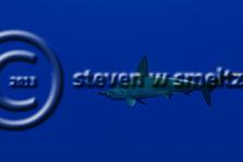 Scalloped Hammerhead Shark, Sphyrna lewini, Molokai Hawaii, Moku Ho'oniki Rock (StevenWSmeltzer.com   (949)290-6367, Steven W SMeltzer)
