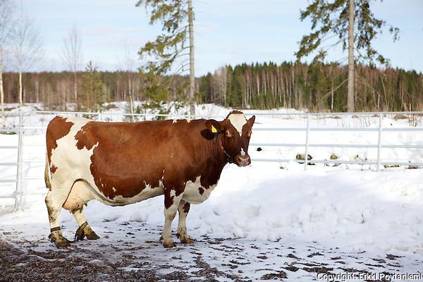 (Photographer: Erkki Poytaniemi)