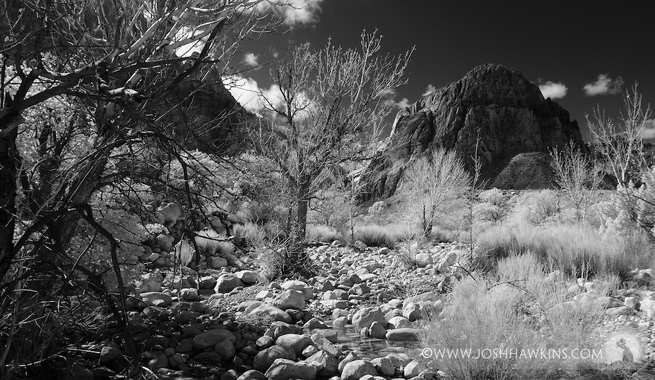 Oak Creek at Red Rock Canyon outside Las Vegas, NV. (Josh Hawkins)