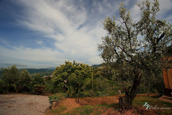View from above Montecatini ~ Tuscany (Elisa Sherman)