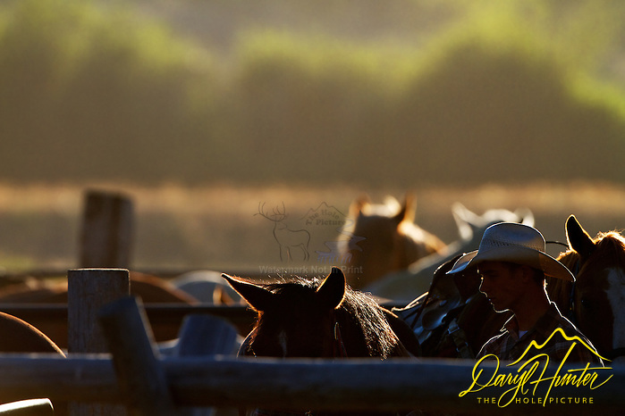 "Backlit Cowboys, wranglers preparing the remuda (Daryl Hunter's ""The Hole Picture""/Daryl L. Hunter)"