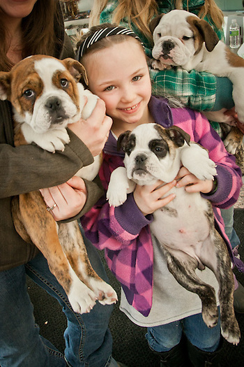 Amanda Steward and her daughters, Anne Marie (10) and Vannessa (6), with bull dog puppies at the Tanana Valley Kennel Club Dog Show, Egan Convention Center, Anchorage  stewardinteriors@hotmail.com (Clark James Mishler)