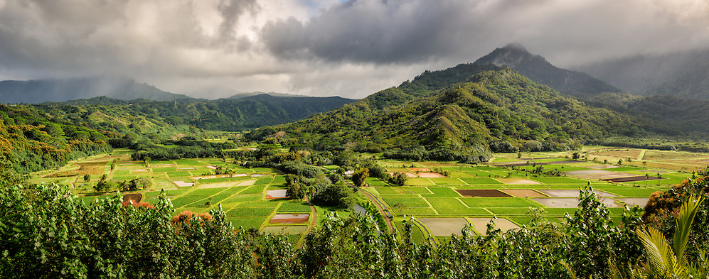 Taro fields in Hanalei, Kauai (about 60% of the Hawaiian taro is grown here, which equates to millions of pounds!) (Doug Oglesby)
