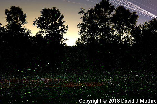 Firefly Trails. Composite of 188 mages taken with a Nikon D810a camera and 58 mm f/1.4 lens (ISO 800, 58mm, f/8, 120 sec). Raw images processed with Capture One Pro and Photoshop CC (statistics, maximum) (David J Mathre)