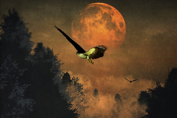 This dynamic, rich piece features the striking visual of falcons in their distinctive, powerful surroundings. A moon that is simply massive, almost too close for comfort, hangs over the evening sky. The falcons are profoundly dedicated to their purpose. They will not stop hunting until they have found what they are looking for. If you happen to be one of the animals preferred by falcons, it isn't hard to imagine the moon representing the heart. It is almost about to burst from fear and excitement. Available in several print forms, or as a home interior décor product. (Jan Keteleer)
