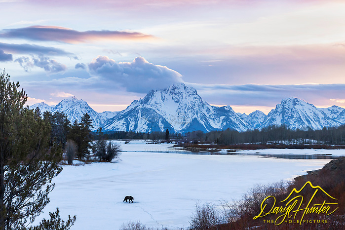 "Grizzly at Oxbow Bend in Grand Teton National Park at sunset (© Daryl Hunter's ""The Hole Picture""/Daryl L. Hunter)"