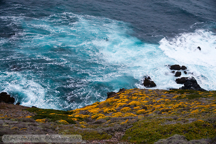 The water of the ocean to the west of Point Sur Light Station was turned sea foam green thanks to the action of waves and high winds.  In this image the blooming hillside is in the frame, providing contrast. (Marc C. Perkins)