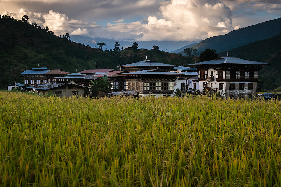 LOBESA, BHUTAN - CIRCA OCTOBER 2014: Rice fields around the village of Lobesa, Chimi Lhakhang close to the temple of Divine Madman (Daniel Korzeniewski)