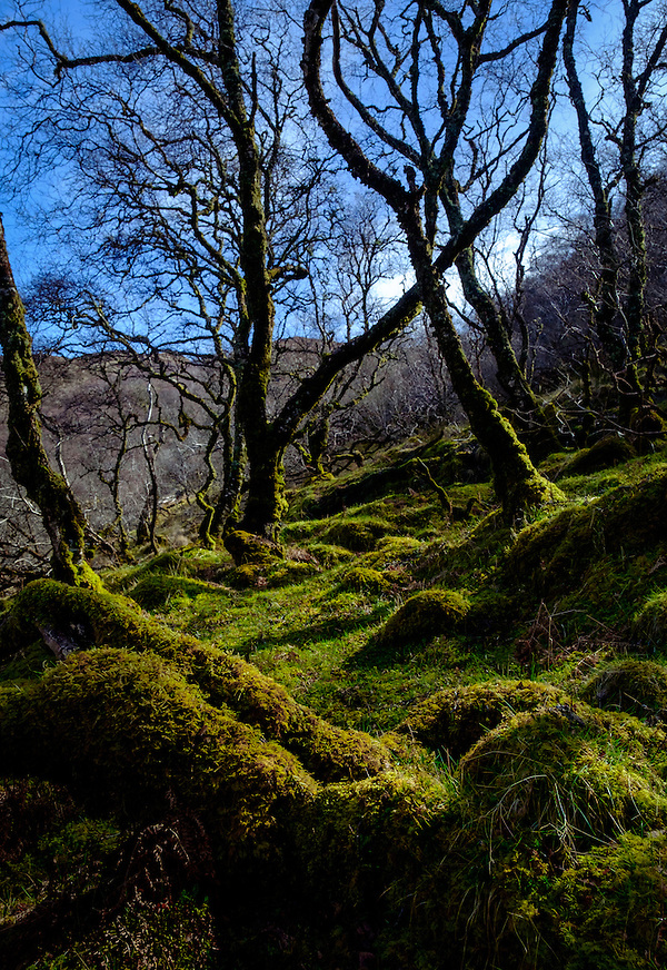 SCOTLAND - CIRCA APRIL 2016: Trees and moss field near Tarskavaig in Skye an Island in Scotland (Daniel Korzeniewski)