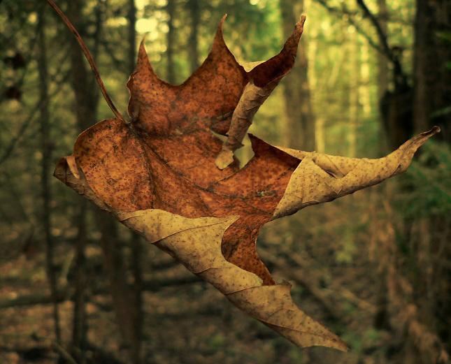 La bella caída libre de una hoja seca
