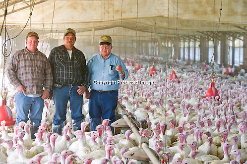 An editorial photo of a family of farmers standing in a turkey house in Arkansas for the New York Times.. (Beth Hall)