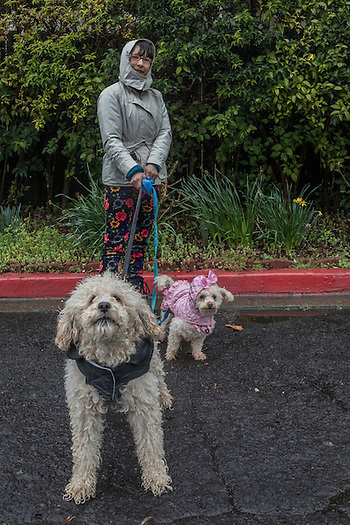 Napa County Fairgrounds Program Supervisor Monica Garibay walks with her dogs, Bengie and Lola, on a rainy day in Calistoga (© 2017 Clark James Mishler)