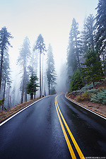 The Generals Highway in Sequoia National Park winds through the foggy Giant Forest in the Sierra Nevada mountain range of California. (Seth K Hughes)