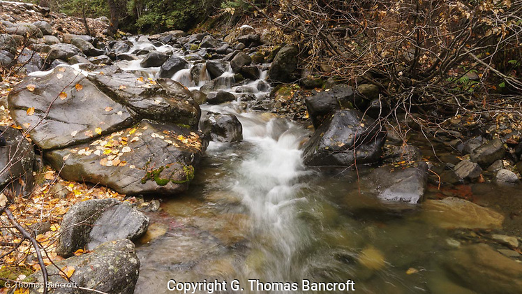 The water tumbles down over rocks along Beverly Creek in the Wenatchee National Forest. (G. Thomas Bancroft)