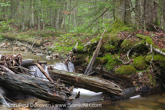 Remnants of a wooden sled road bridge, near Ice Pond, that crosses Birch Island Brook in Lincoln, New Hampshire USA. This area was part of Camp 7 during the East Branch & Lincoln Railroad era, which was a logging railroad in operation from 1893 - 1948.