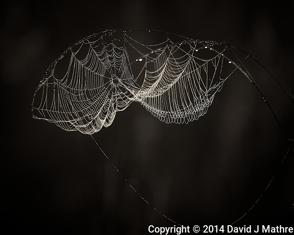 Dew Covered Spider Web at Sunrise. Big Cypress Swamp National Preserve in Florida. Image taken with a Nikon Df camera and 80-400 mm VRII lens (ISO 100, 400 mm, f/5.6, 1/100 sec). (David J Mathre)