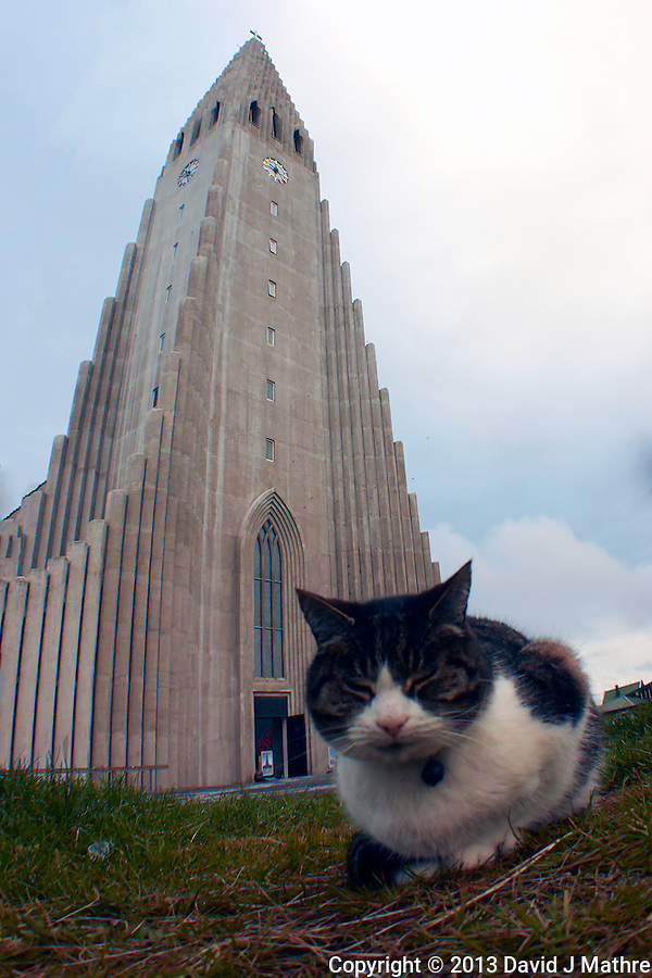 Cat in front of Hallgrímskirkja (church of Hallgrímur) in Reykjavik, Iceland. Image taken with a Nikon 1 V2 camera and 10 mm f/2.8 lens with an Olympus FCON-T01 fisheye adapter (ISO 160, 7.5 mm, f/4, 1/1000 sec). (David J Mathre)