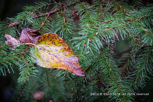 11.23.18 - Nested... (©David M Sax - all rights reserved)
