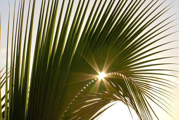 Sunburst through a palm frond in Hawaii (Douglas Page)