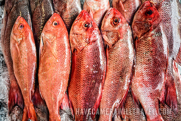 Maine Avenue Fish Market Red Snapper at Washington Fish Market j233162511
