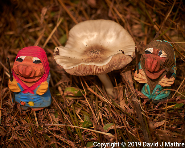 Mushroom Hunting Trolls found a Big One. Image taken with a Leica CL camera and 55-135 mm lens (ISO 100, 135 mm, f/4.5, 1/500 sec). (DAVID J MATHRE)
