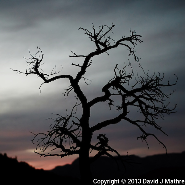 Creepy Tree at Dusk in Sedona, Arizona. Image taken with a Nikon 1 V2 camera and 32 mm f/1.2 lens (ISO 200, 32 mm, f/1.2, 1/100 sec). Nikonians ANPAT-13 Day 2. (David J Mathre)