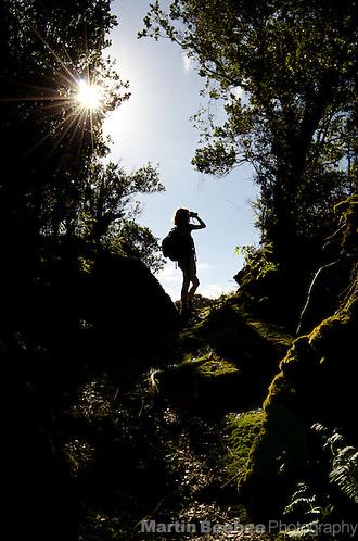 Woman birdwatching on the Kawaikoi Stream Trail, Na Pali-Kona Forest Reserve, Kauai, Hawaii (Martin Beebee Photography)