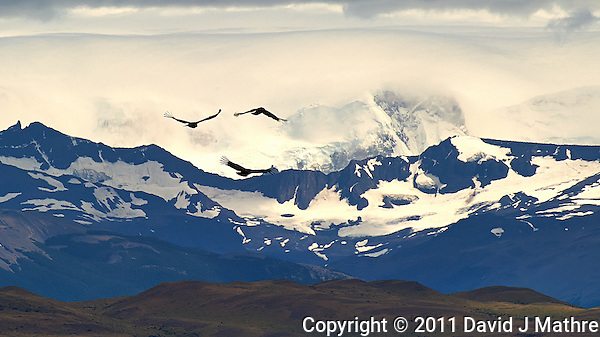 Three Andean Condors Soaring in Patagonia. Torres del Paine National Park, Chile. Image taken with a Nikon D3s and 70-300 mm VR lens (ISO 200, 300 mm, f/14, 1/800 sec). (David J Mathre)