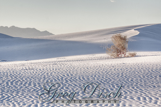 Lone plant among the gypsum dunes at White Sands National Monument in New Mexico. (Greg Disch)