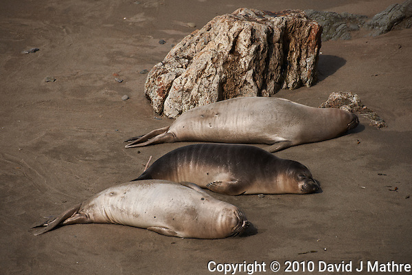 Elephant Seals at Piedras Blancas Beach, Central California Coast. Image taken with a Nikon D3x and 70-300 mm VR lens (ISO 100, 200 mm, f/5.6, 1/800 sec) (David J Mathre)