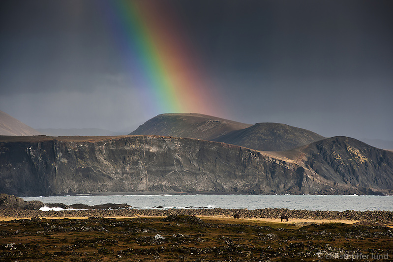 A rainbow over Hraunsvík, east of Grindavík on Reykjanes Peninsula, Iceland. Horses grazing on a field. Dark grey sky in contrast with rainbow. (Christopher Lund/©2011 Christopher Lund)