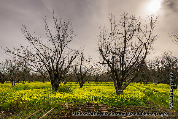 Farmland in Silicon Valley- Sunnyvale (Michael Halberstadt)