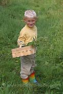 Junge, Kind erntet Brennnesseln für Kräutersuppe, Brennessel, Brennnessel, Brenn-Nessel, Urtica dioica, Stinging Nettle, Ortie (Frank Hecker/Frank Hecker Naturfotografie)