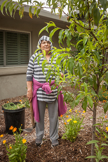 Middleton resident and professional gardener, Juana Garcia, gardens a property on Cedar Street in Calistoga. (Clark James Mishler)