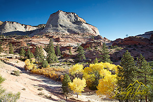 "Fall colors, Zion National Park (Daryl Hunter's ""The Hole Picture"" � Daryl L. Hunter has been photographing the Yellowstone Region since 1987, when he packed up his view camera, Pentex 6X7, and his 35mm�s and headed to Jackson Hole Wyoming. Besides selling photography Daryl also publ)"
