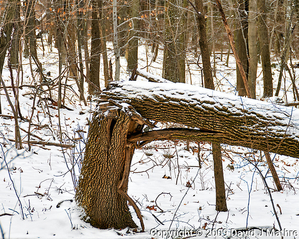 """If a tree falls in a forest and no one is around to hear it, does it make a sound?"" A winter walk at the Sourland Mountain Preserve. Image taken with a Nikon D300 camera and 18-200 mm lens (ISO 200, 90 mm, f/5.6, 1/125 sec). (David J Mathre)"