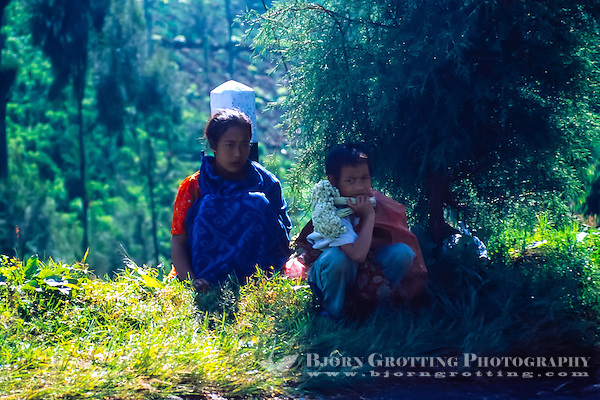Java, East Java, Bromo Tengger. Two local children selling dried flowers at the Bromo crater rim. Anaphalis javanica or Javanese Edelweiss is now probably extinct in this area. (Photo Bjorn Grotting)