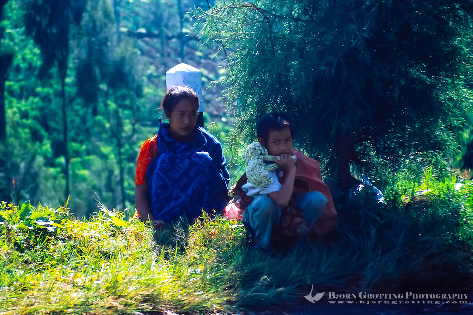 Java, East Java, Bromo Tengger. Two local children selling dried flowers at the Bromo crater rim. Anaphalis javanica or Javanese Edelweiss is now probably extinct in this area. (Bjorn Grotting)