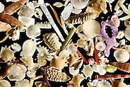 [Digital focus stacking] The white carbonate sand from Raja Ampat, Indonesia, is generated by a vast diversity of organisms: e.g. foraminifera, sponges, brachiopods, echinoderms, bryozoa and mollusks. Diagonal of frame approx. 8 mm | Im weißen Kalksand von Raja Ampat, Indonesien, finden sich die Überreste von einer riesigen Vielfalt an Organismen: z. B. Foraminiferen,  Sklerite von Schwämmen und Weichkorallen, Molluskenschalen, Kalkalgen, Bryozoen, Crinoiden und Skelettreste von Stachelhäutern.  Bilddiagonale ca. 8 mm. (Solvin Zankl)