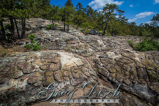 Turtle Rocks are some of the most unique in Petit Jean State Park near Morilton Arkansas...Mounded polygonal structures .resembling a turtle shell were carved in .thick sandstones of the Hartshorne .Sandstone. (Greg Disch)
