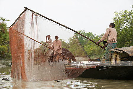 MONGLA, BANGLADESH - FEBRUARY 17, 2014: Unidentified men do fishing with otters in Mongla, Bangladesh. Fishing is the main source of income for local people and annually it decreases due to diminishing of quantity of fish in delta because of the global warming influence. (Dmitry Chulov)