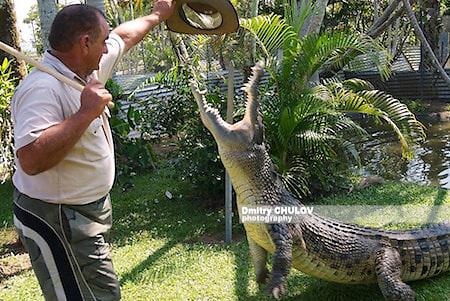 крокодил, Австралия.