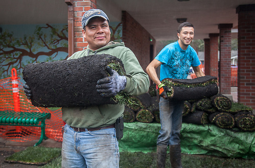 Milton Rosales (blue) and his friend Chucky lay sod at the Calistoga Elementary School on a wet afternoon. (Clark James Mishler)
