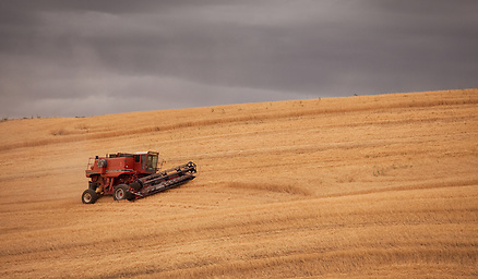 This combine works a large wheat field under the hot sun during the month of August in the Palouse of Eastern Washington. (Benjamin Chase / Ben Chase Photography)