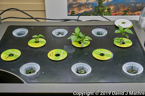 AeroGarden Farm 10 Left (Day 33). L04-L06 New Mexico Hatch Pepper; L07-L09 Small Red Hot Peppers. Image taken with a Leica TL-2 camera and 35 mm f/1.4 lens (ISO 160, 35 mm, f/8, 1/80 sec). (DAVID J MATHRE)