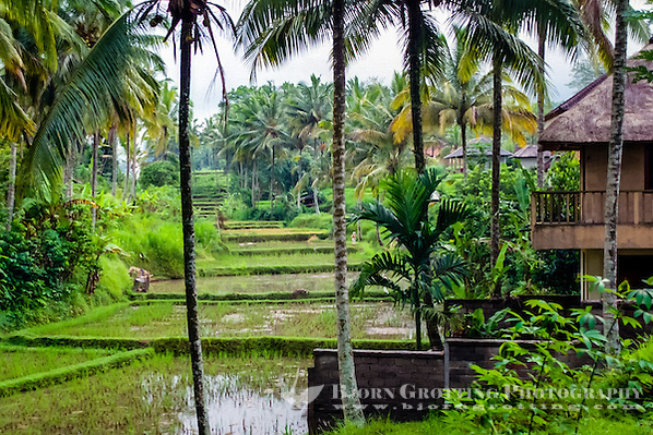 Bali, Gianyar, Ubud. The area surrounding Ubud is lovely and peaceful. (Photo Bjorn Grotting)