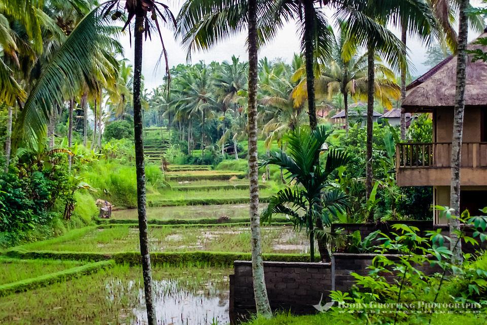 Bali, Gianyar, Ubud. The area surrounding Ubud is lovely and peaceful. (Photo Bjorn Grotting)